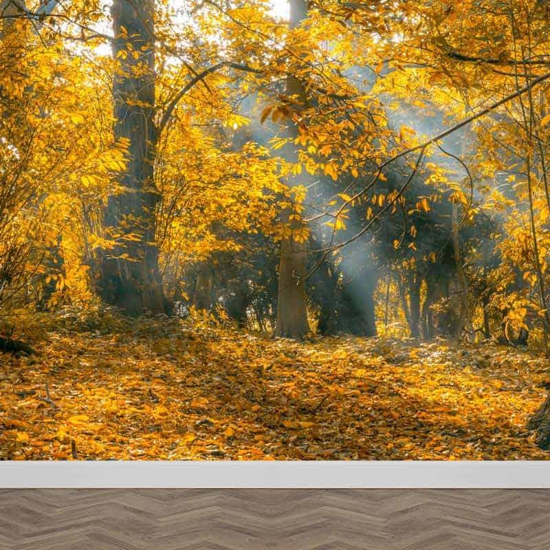 Fotobehang zonnestralen in herfstbos