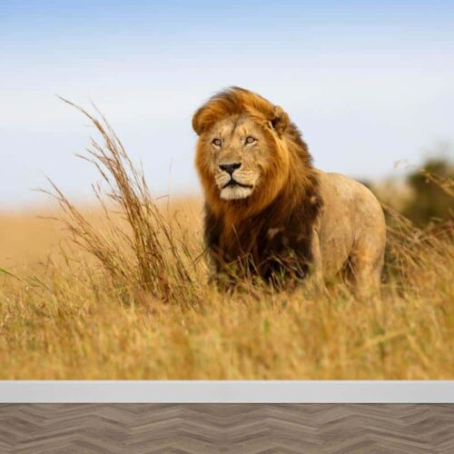 Fotobehang leeuw in Afrika