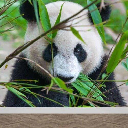 Fotobehang schattige reuzenpanda