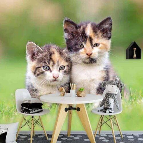 Fotobehang kittens