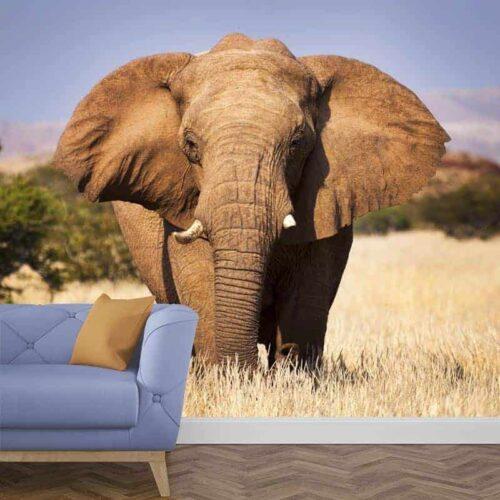 fotobehang olifant close-up