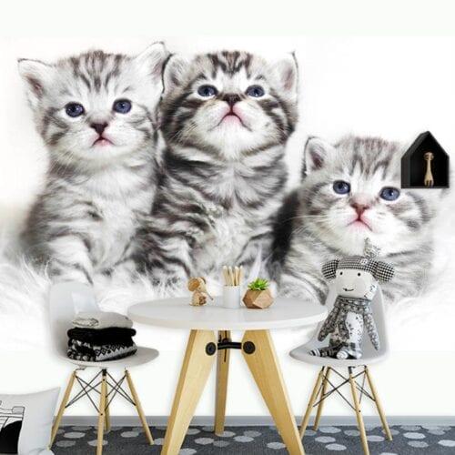fotobehang 3 Kittens