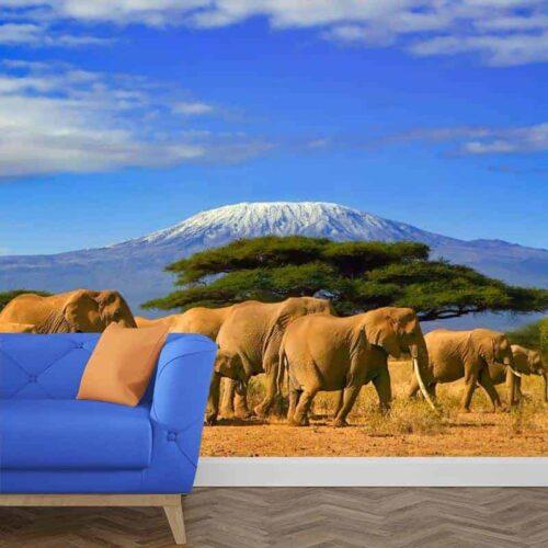 fotobehang olifanten bij de kilimanjaro