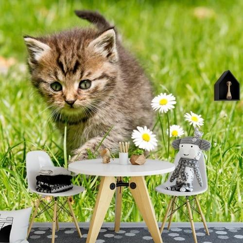 Fotobehang Kitten op onderzoek