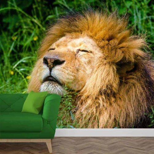 Fotobehang relaxte leeuw