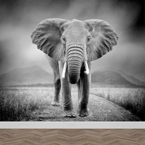 Fotobehang olifant zwartwit