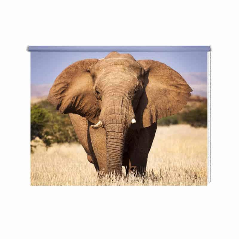 Rolgordijn olifant close up