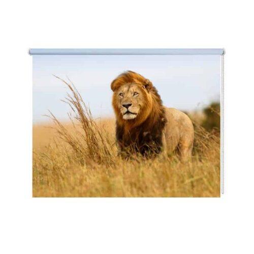 Rolgordijn Leeuw in Afrika