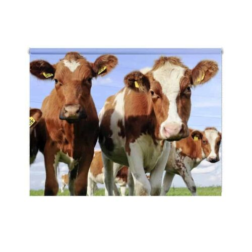 Rolgordijn Hollandse koeien