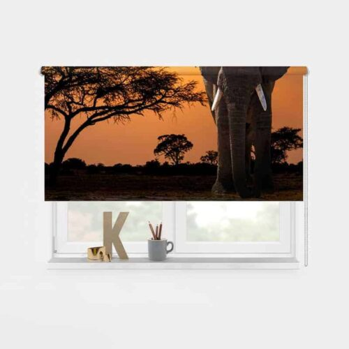 Rolgordijn olifant in avondschemering