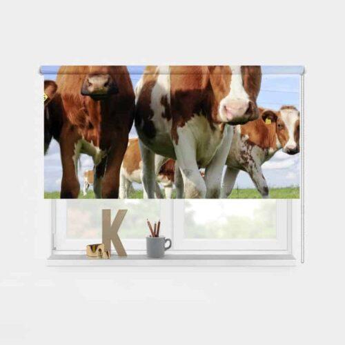 Rolgordijn Hollandse koeien 1
