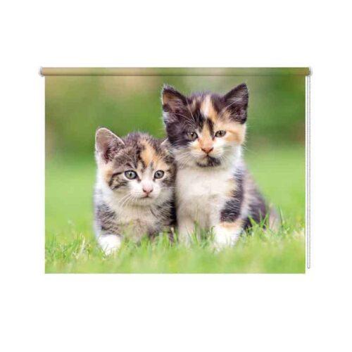 rolgordijn kittens