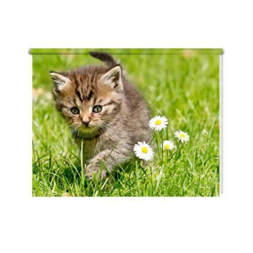 rolgordijn kitten