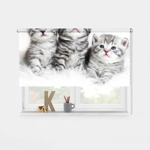 rolgordijn 3 Kittens