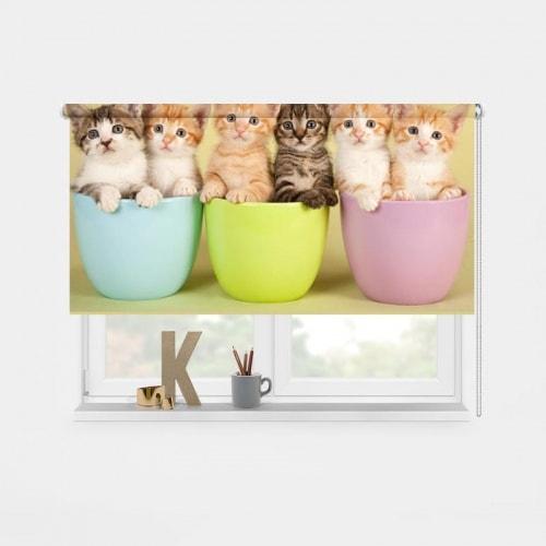 rolgordijn kittens op een rij