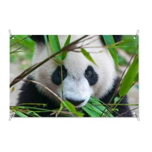 Tuinposter schattige panda
