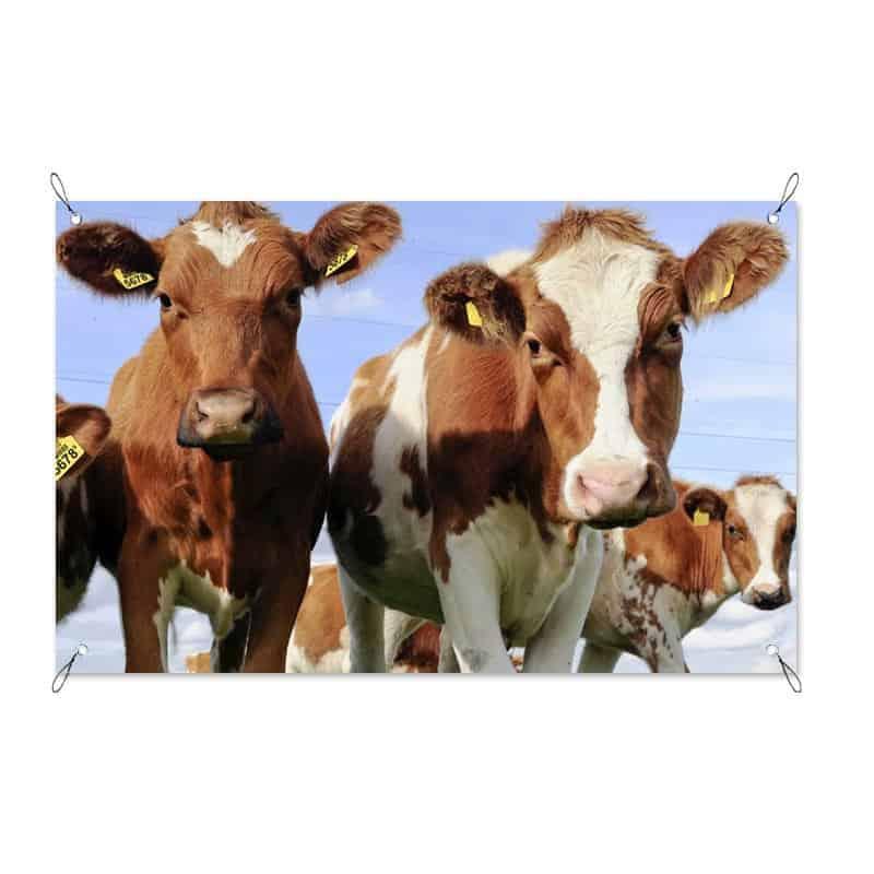 Tuinposter Hollandse koeien
