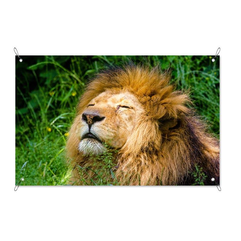 Tuinposter Relaxte leeuw