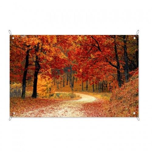 Tuinposter herfst in het bos