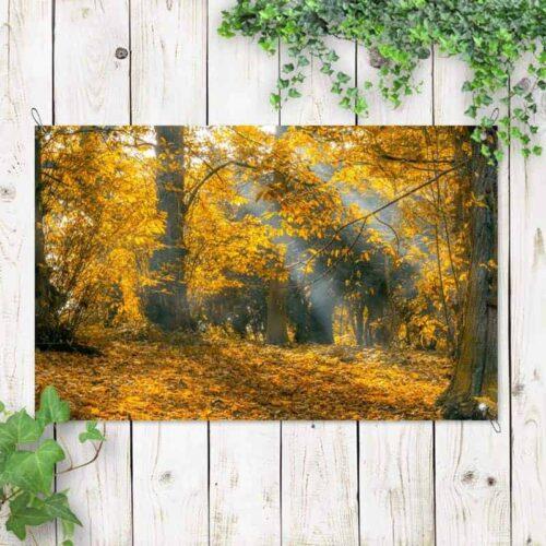 Tuinposter zonnestralen in het bos