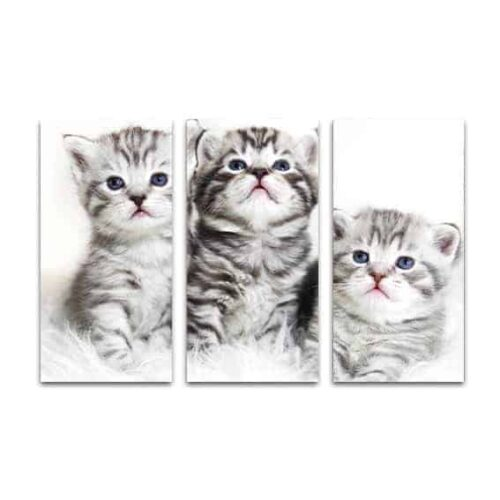 drieluik canvas 3 kittens