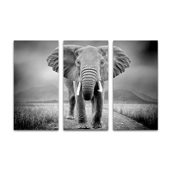 drieluik canvas olifant zwartwit op maat gemaakt. Black Bedroom Furniture Sets. Home Design Ideas