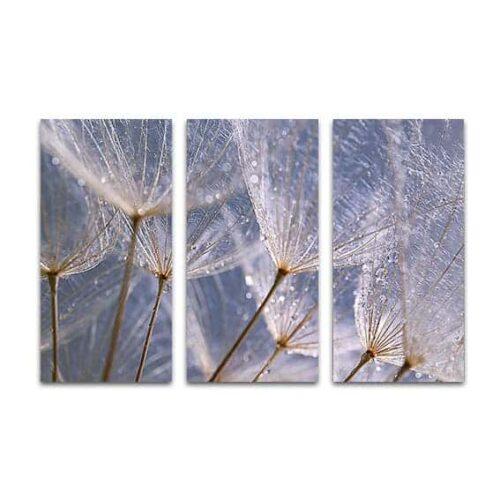 Drieluik canvas Dandelion grijs blauw