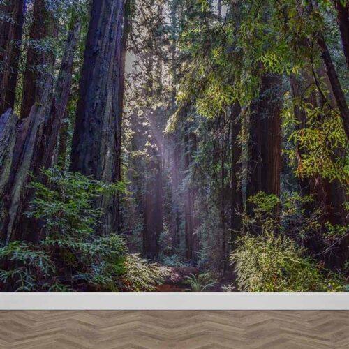 Fotobehang-In-het-donkere-bos