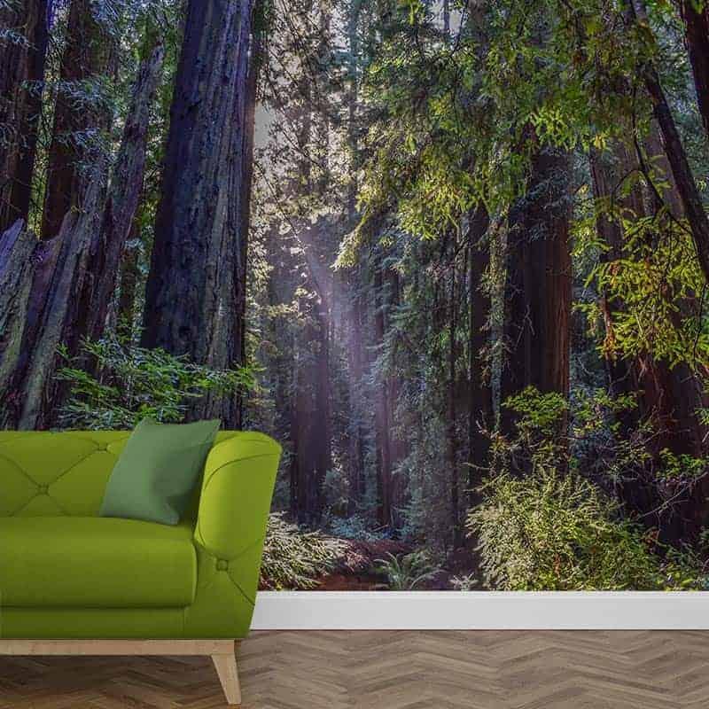 Fotobehang in het donkere bos