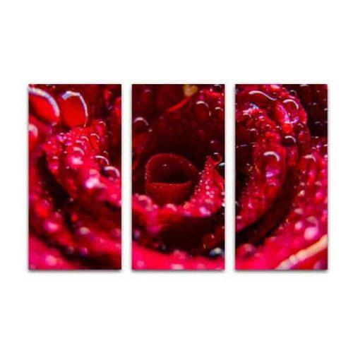 Drieluik canvas roos met waterdruppels
