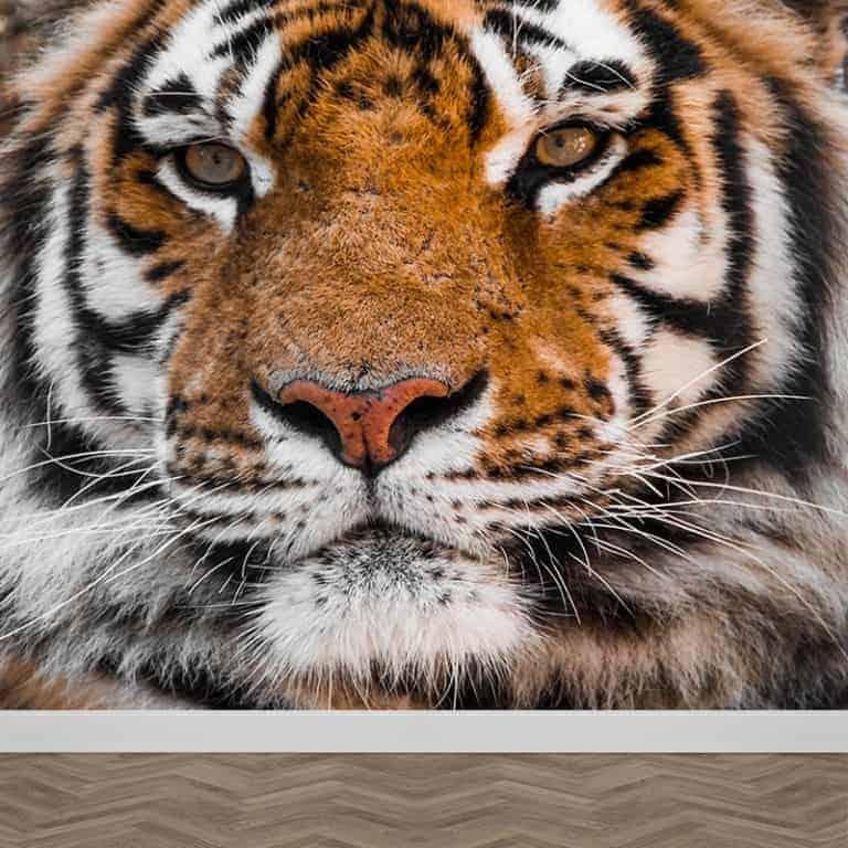 Fotobehang tijger close up