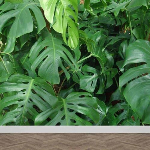 Fotobehang groene planten