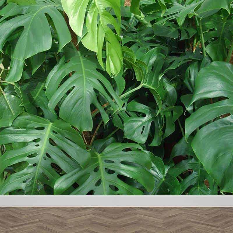 fotobehang groene planten gratis op maat gemaakt