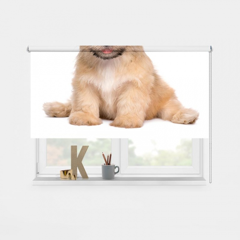 Rolgordijn Schattige puppy