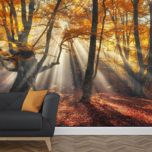 Fotobehang zon in het herfstbos