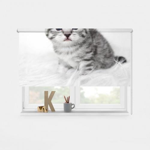 Rolgordijn schattig katje
