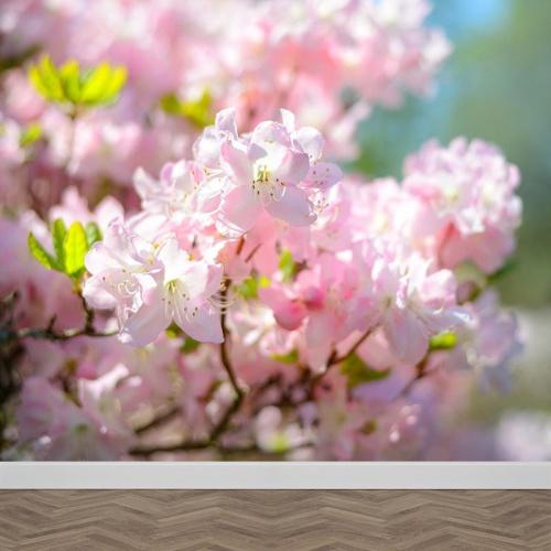 Fotobehang Prunus bloesems