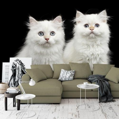 Fotobehang 2 witte kittens