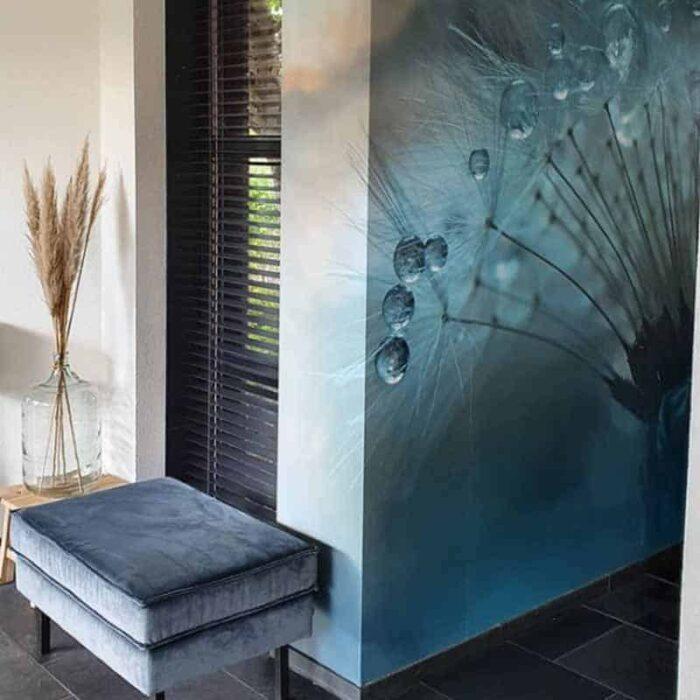 Fotobehang dandelion met waterdruppels