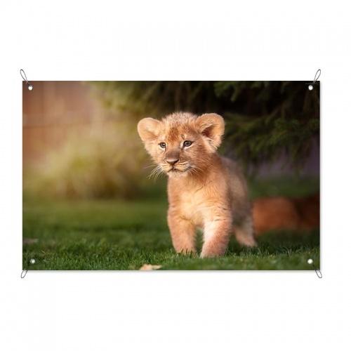 Tuinposter Leeuwtje in het gras