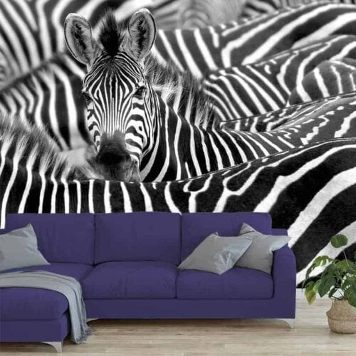Fotobehang zebra