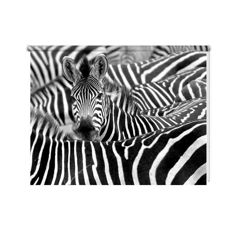 Rolgordijn Zebra