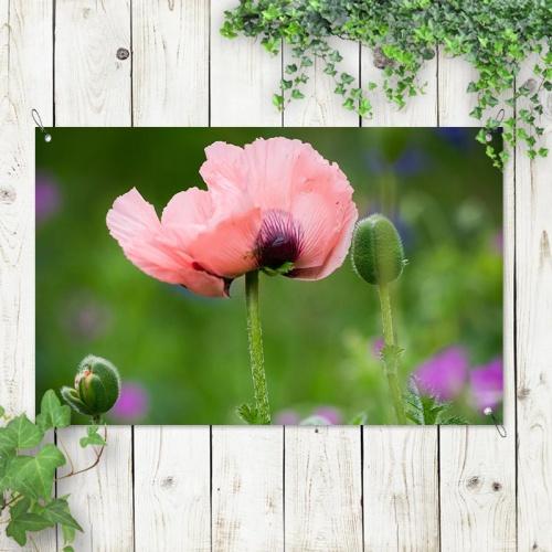 tuinposter Wilde roze bloem