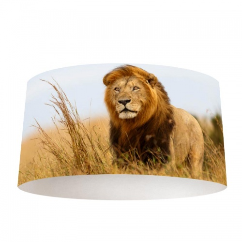 Lampenkap Leeuw in Afrika