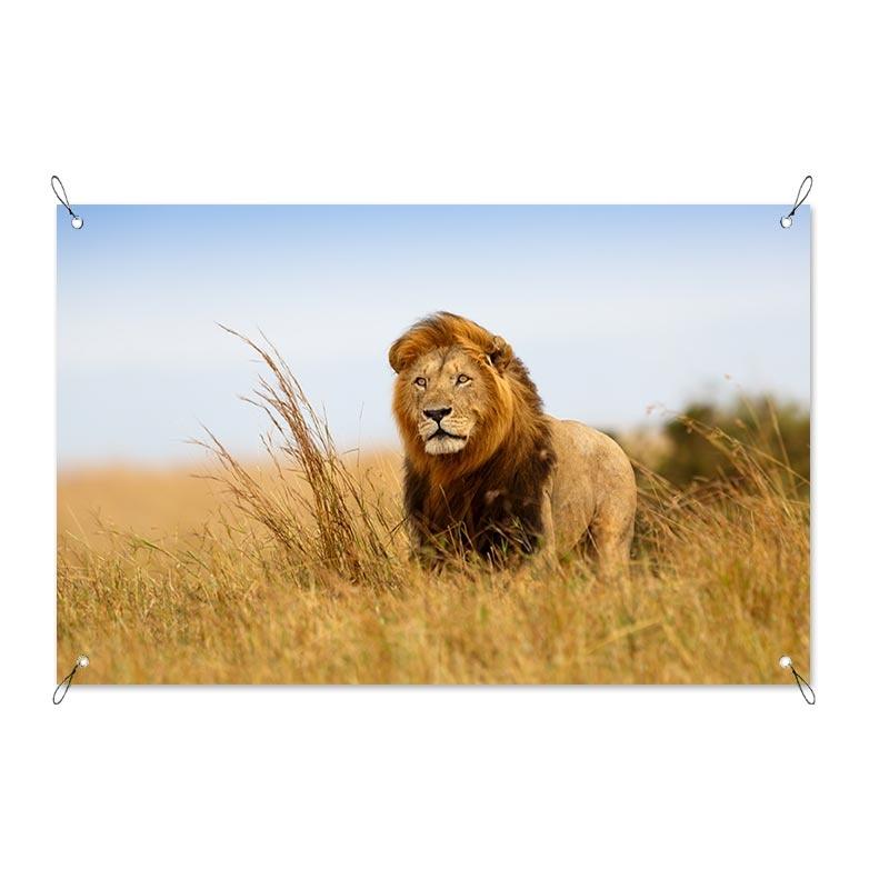 Tuinposter Leeuw in Afrika