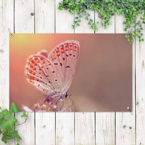 Tuinposter Vlinder op bloem