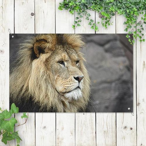 Tuinposter Koning van de jungle