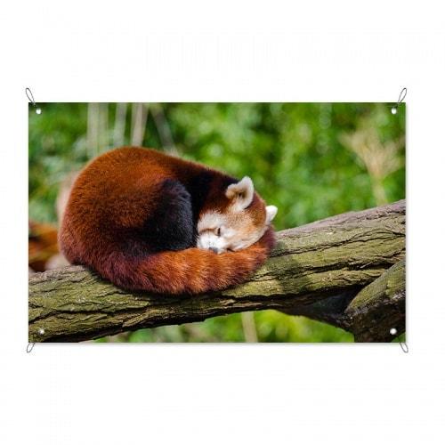 Tuinposter Rode pandabeer op tak