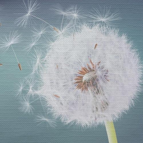 Tafelkleed dandelion in de wind
