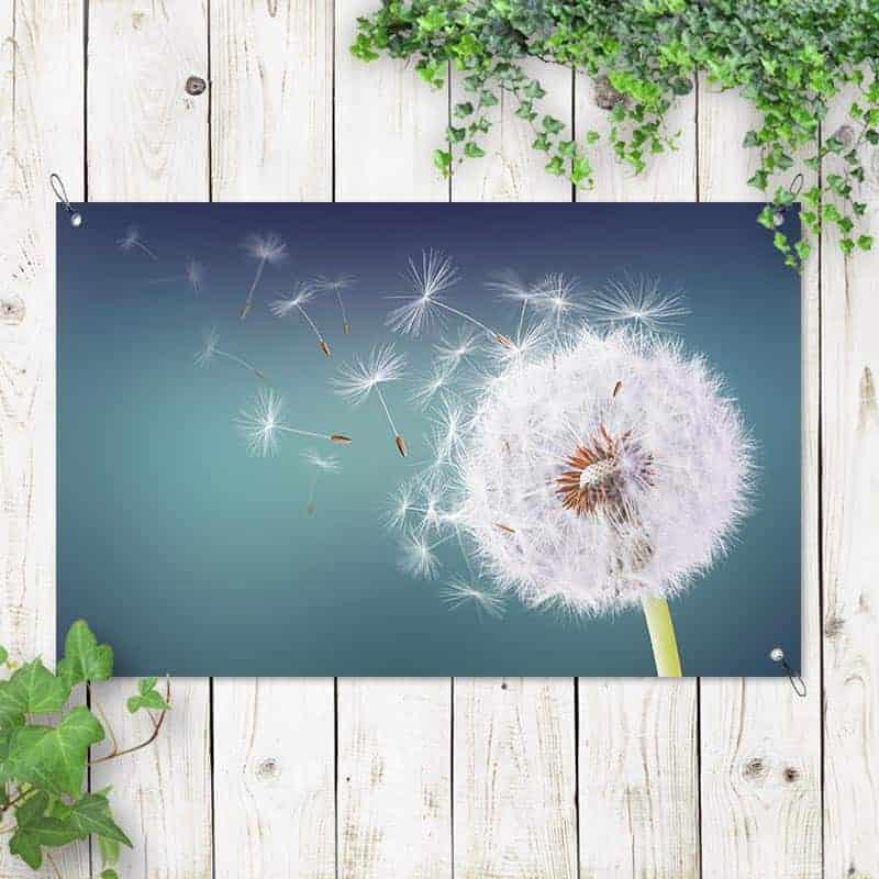 Tuinposter Dandelion in de wind